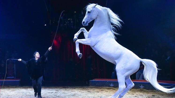 Circus Knie 2016 Smile Géraldine Knie
